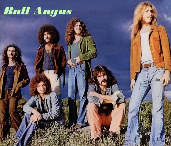 Bull Angus1