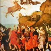 Bull Angus2